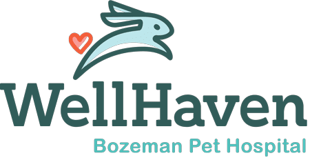WellHaven Bozeman Pet Hospital
