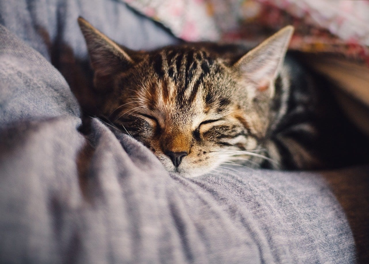 pet wellness plan